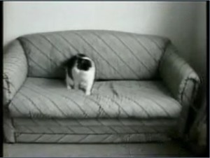 sample1-cats-2