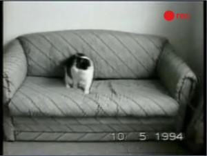 sample1-cats